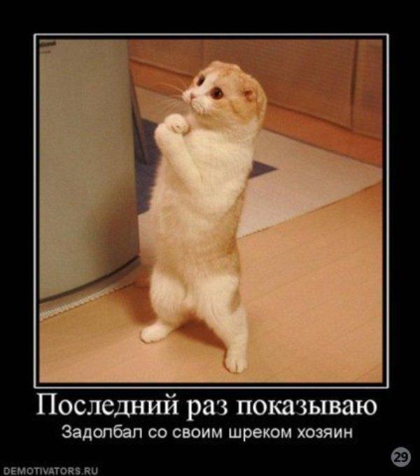 Демотиваторы с котами, часть 1