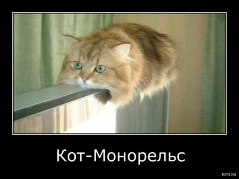 Демотиваторы с котами часть 1