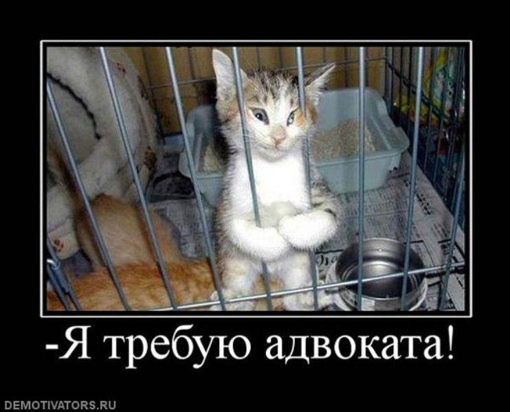 — демотиваторы с котами часть 1
