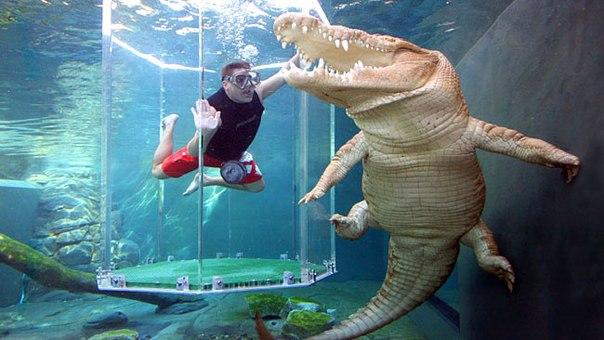 Несмотря на всю кажущуюся опасность и риск, аттракцион является абсолютно безопасным для человека, так как толщина стенок клетки равна 4 сантиметрам, и каким бы мощным и большим не был крокодил, он не сможет пробить толстый слой стекла.