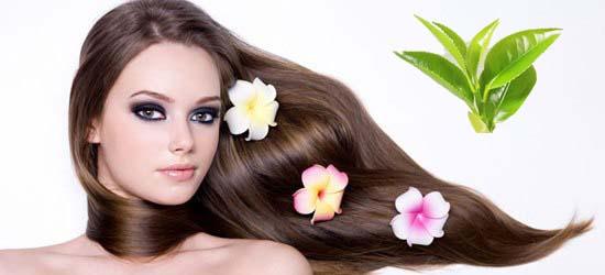 Красота ваших волос и чай