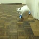Наказали кота за собственные тапки