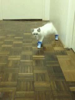 наказали кота