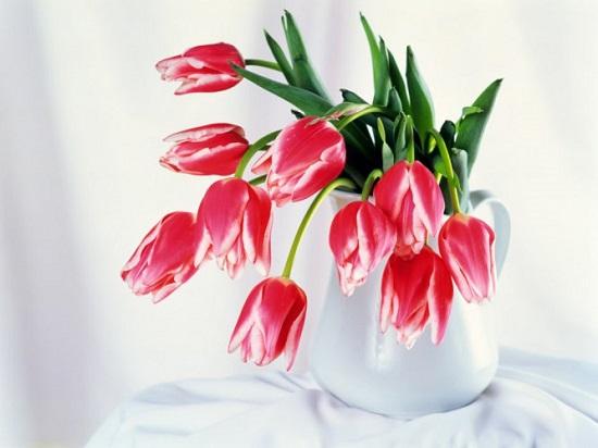 Купить цветы в интернет магазине