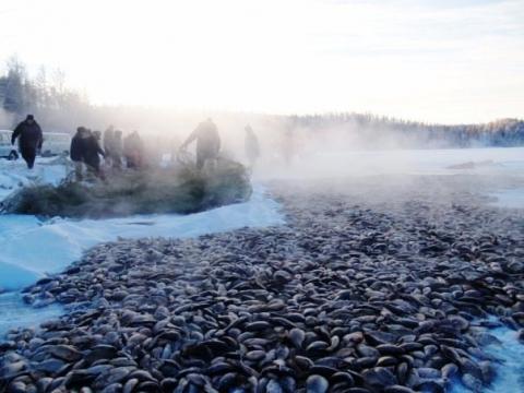 Уникальный вид рыбалки – Мунха