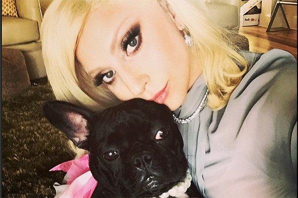 Леди Гага работает над линией одежды и кормов для собак