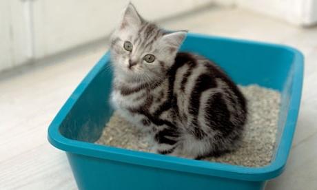 Приучаем котенка к туалету