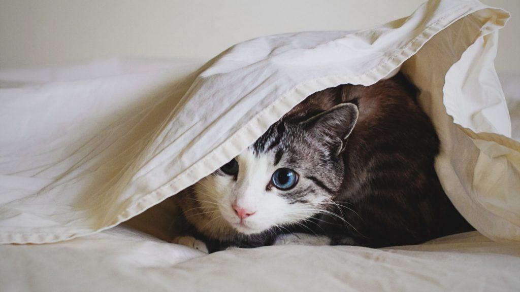 Какую кошку выбрать для дома