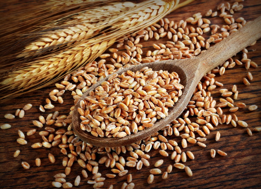 Полба и пшеница в чем разница